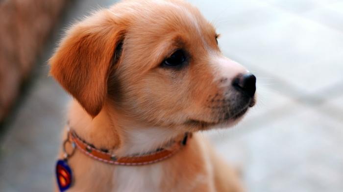 sight, dog, puppy, animals