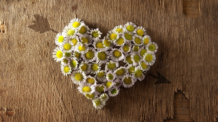 tree, heart, chamomile, background, flowers