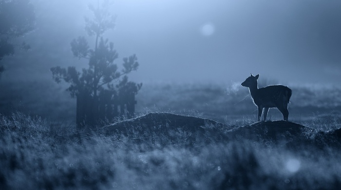 depth of field, baby animals, silhouette, blue, fawns, nature, animals