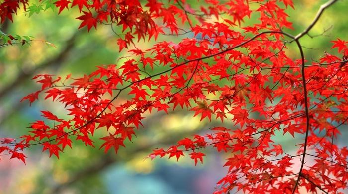 branch, Sun, greenery, stunner, foliage, beauty, red, autumn