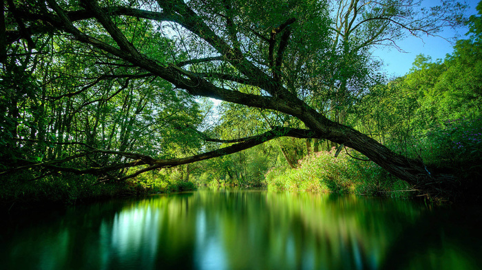 water, tree, Sun, reflection, stunner, beauty, greenery, river, twigs