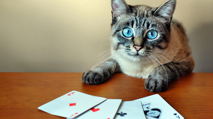 creative, table, photo, game
