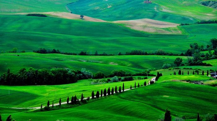 Италия, дорога, зеленый, деревья, природа, поля, тоскана