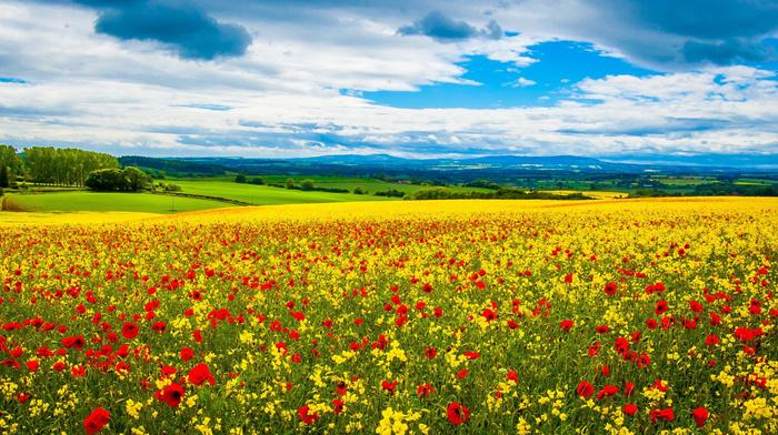 horizon, field, landscape, nature, green, flowers, clouds, sky, grassland, yellow