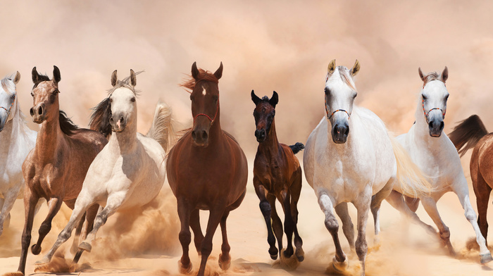 animals, horses, panorama