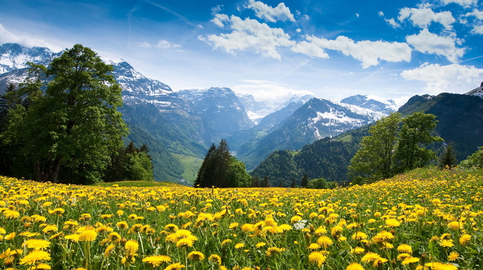 nature, forest, flowers, clouds, mountain, sky, Alps