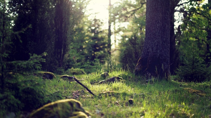 landscape, forest, forest clearing, nature, sunlight