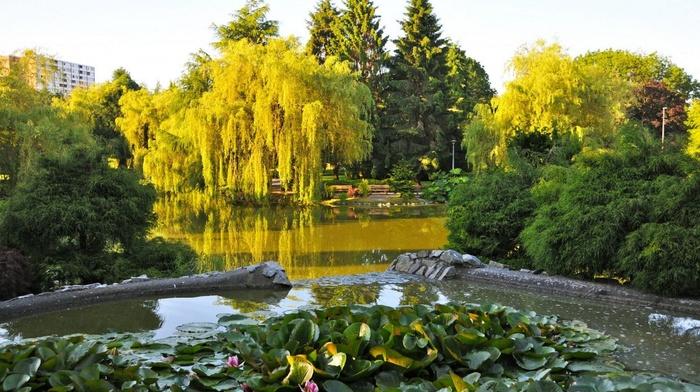 pond, Canada, nature, park, trees