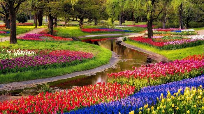 nature, flowers, sunrise, park, pond, tulips, trees