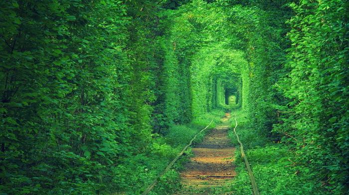 nature, Ukraine, stunner, path