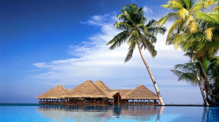 nature, tropics, palm, clouds, island, sea, sky