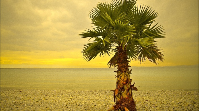sky, beach, sea, summer, palm