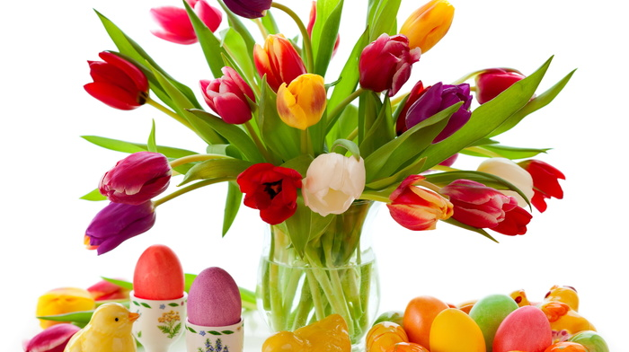 tulips, toys, white background