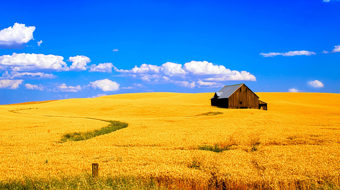 house, landscape, field, sky, clouds, nature, wheat