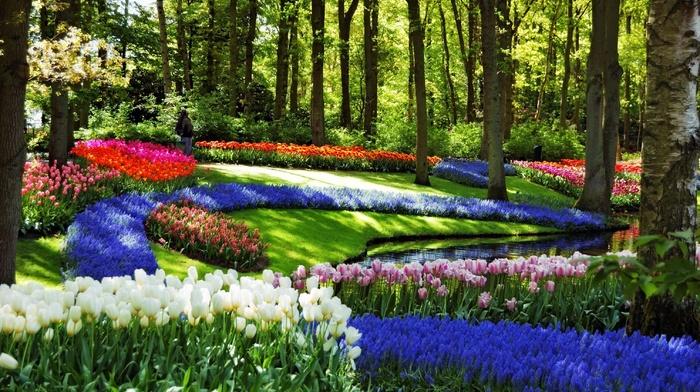 pond, creek, flowers, spring, nature, landscape