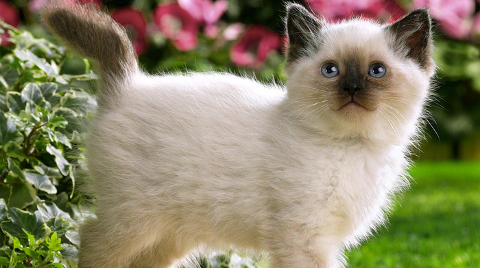 animals, flowers, kitten