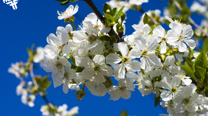 bloom, cherry, sky, spring