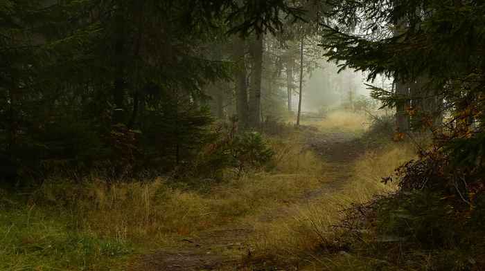 trees, autumn, mist, nature, forest