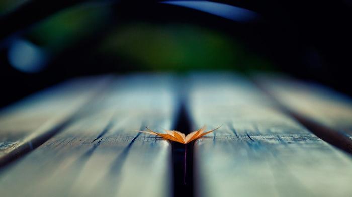 глубина резкости, природа, деревянная поверхность, листья, макро