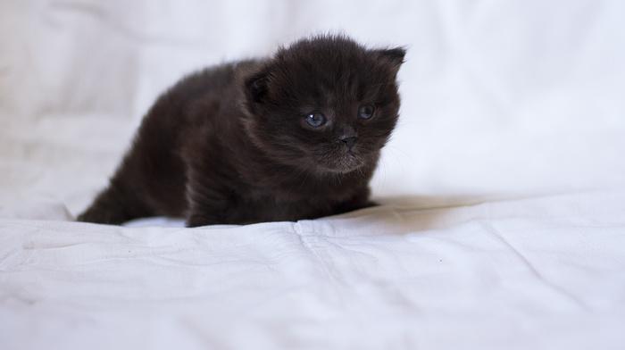kitten, cat, animals