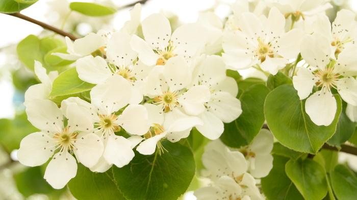 bloom, tree, flowers, spring
