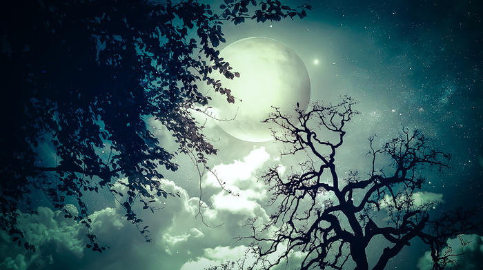 night, moon, photoshop, fantasy, trees, twigs, stars, clouds