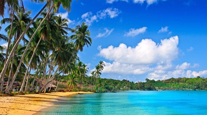 ocean, resort, summer, palm trees, beach, tropics, clouds, nature, sky