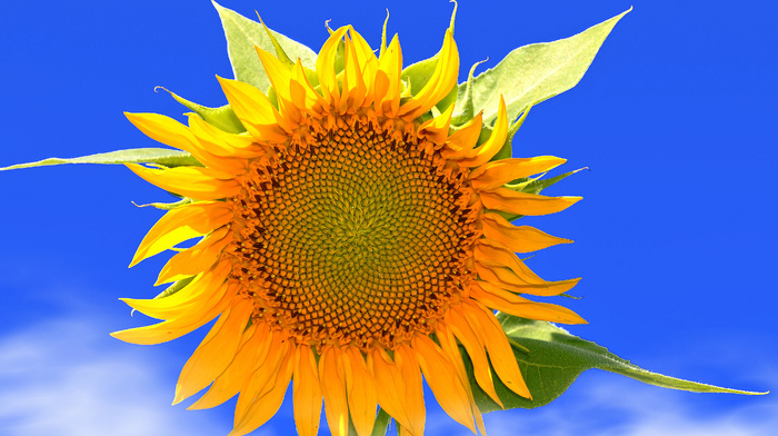 flowers, nature, summer, flower, sky