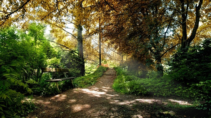 лес, деревья, грязная дорога, путь, глубина резкости, природа