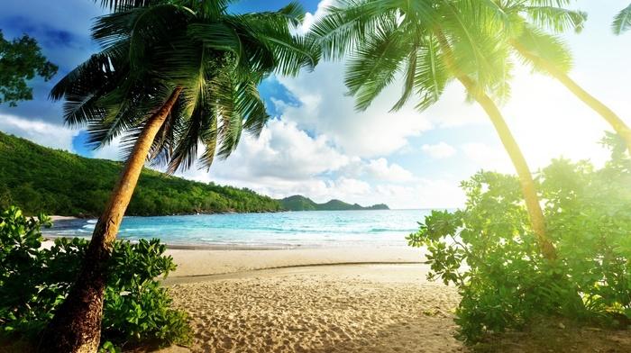 sand, jungle, tropics, nature, stunner, sky, palm trees, beach, ocean, clouds