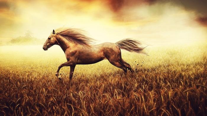 wheat, animals, horse, field