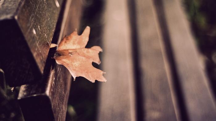 скамейка, глубина резкости, листья