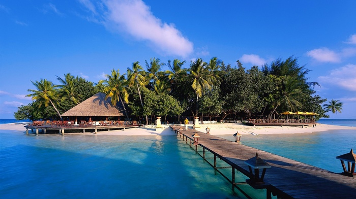 palm trees, ocean, island, resort, summer, tropics, nature
