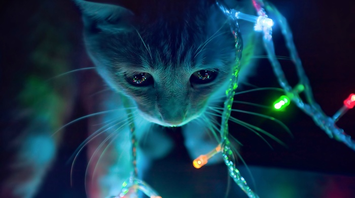 Lights Christmas Anime Cat Animals Download Wallpaper