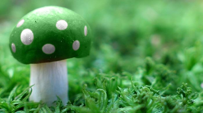 Super Mario, green, mushroom