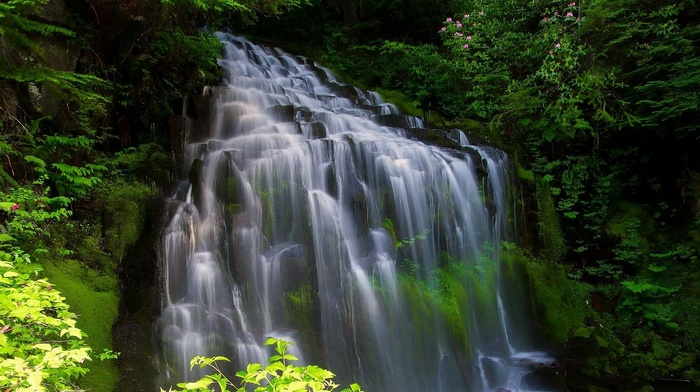 water, stones, photoshop, flowers, forest, beautiful, waterfall, trees, nature