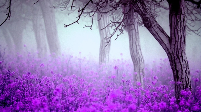 spring, trees, morning, flowers, mist