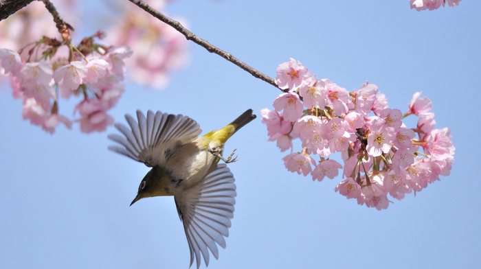 bird, fly, tree, spring, macro, nature, flowers, photo, branch