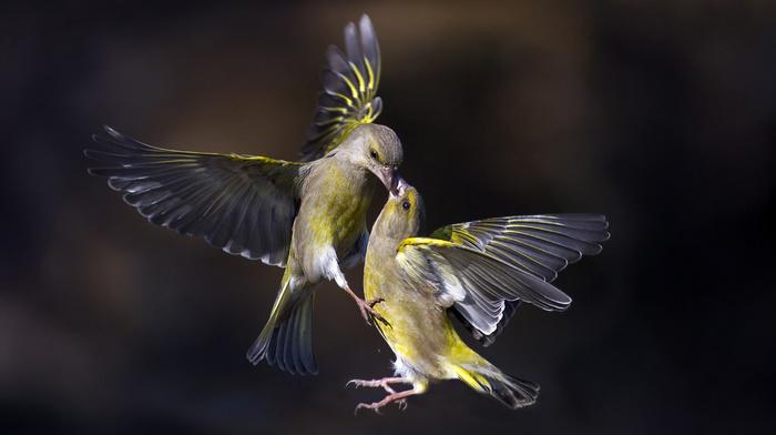 macro, nature, fly, birds, photo, animals