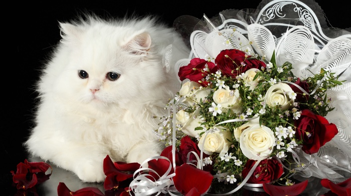 flowers, white, roses, bouquet, cat