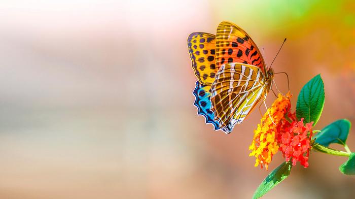 цветы, работа, красивые, арт, бабочка, макро, фотошоп, весна, листья