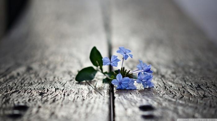 природа, глубина резкости, цветы, макро, размыто