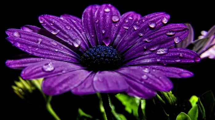 water, flowers, drops, flower, photo, dew, macro