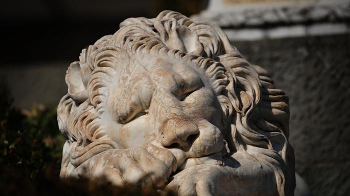 macro, Ukraine, stunner, photo, lion