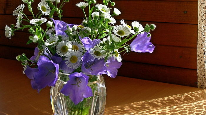 chamomile, Sun, vase, beauty, bells, still life, flowers