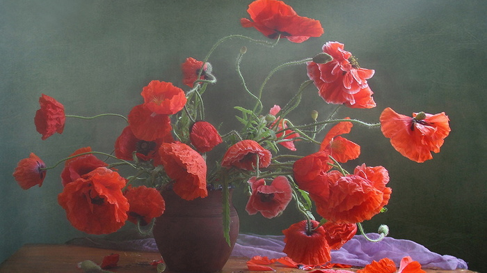 beauty, poppies, flowers, vase, still life