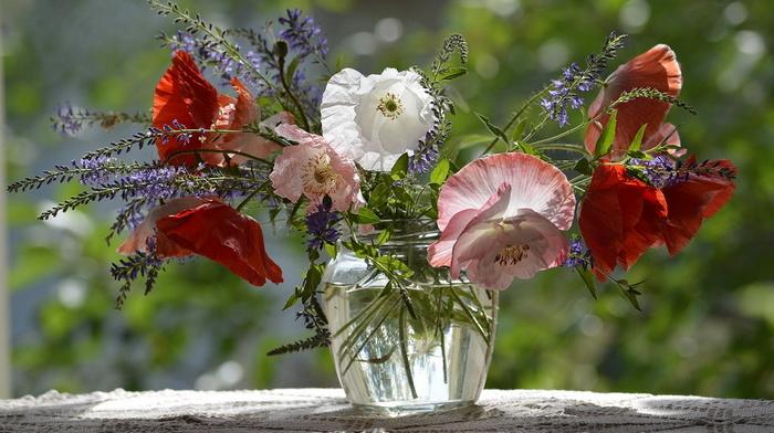 poppies, flowers, vase, still life, beauty