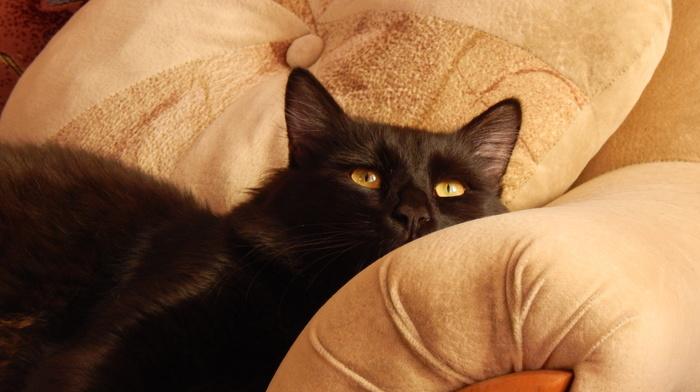 rest, couch, animals