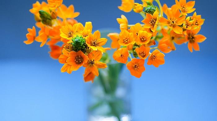still life, vase, flowers, beauty