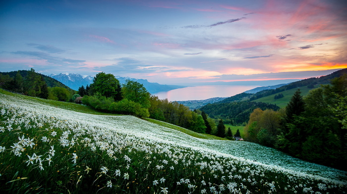 grassland, mountain, flowers, field, house, sunset, landscape, nature, forest, sky, lake